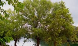 Definición de Árbol