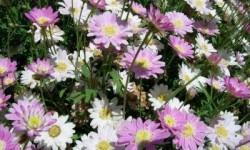 Definición de Flores