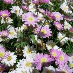2-8-fondos-escritorio-flores