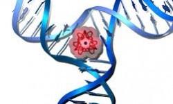 Definición de Ácidos nucleicos