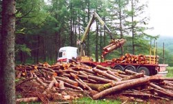 Definición de Explotación Forestal