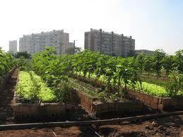 definici n de horticultura concepto en definici n abc