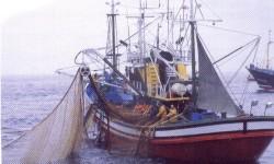 Definición de Pesca Marítima