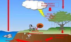 Definición de Ciclo del nitrógeno