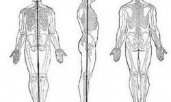 Definición de Posición anatómica
