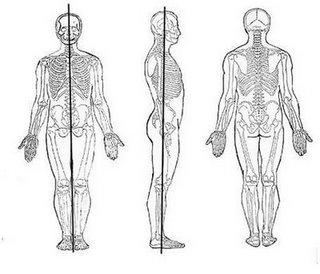 Tipos de ejes anatomicos