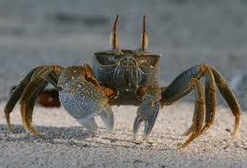crustaceo