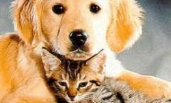 Definición de Animal doméstico