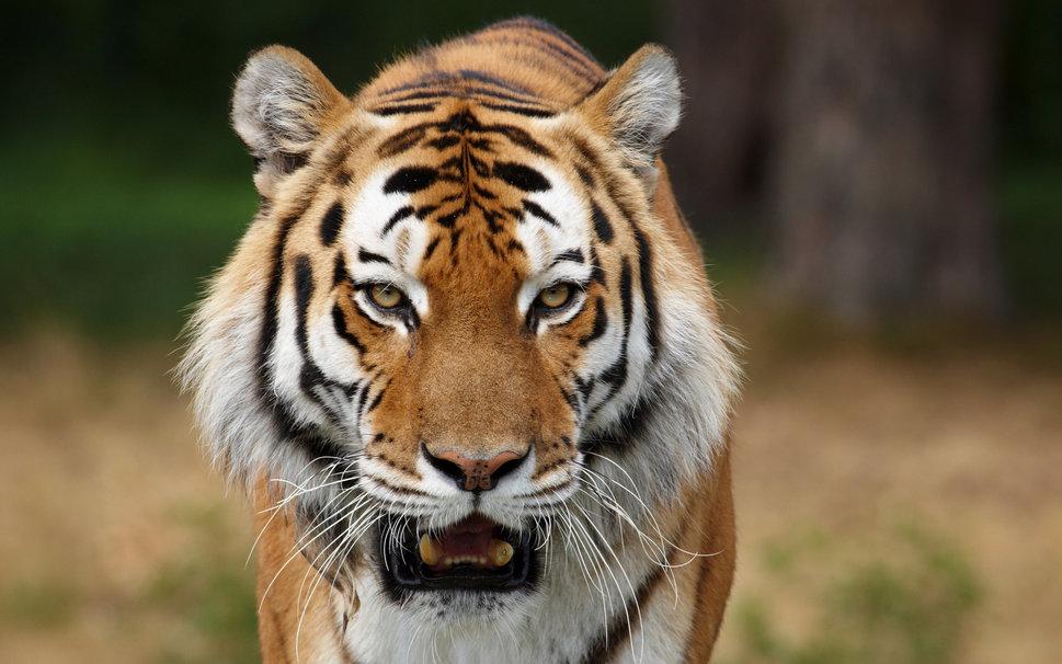 Resultado de imagen para animales depredadores