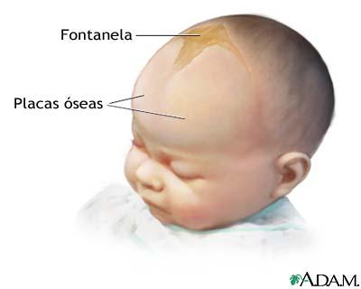 Fontanela