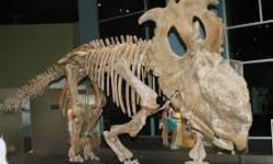 Definición de Paleontología