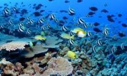 Definición de Ecosistema Acuático
