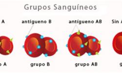 Definición de Grupo Sanguíneo