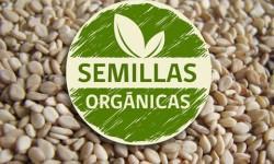 Definición de Semillas Orgánicas