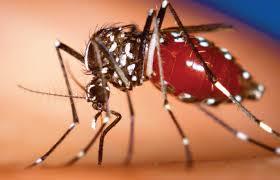 Chikungunya3