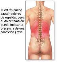 Espalda 2