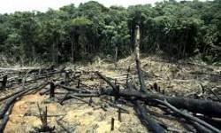 Definición de Deforestación