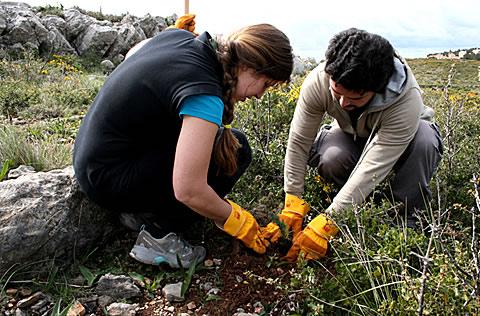 Definici n de reforestaci n concepto en definici n abc for Viveros en palencia