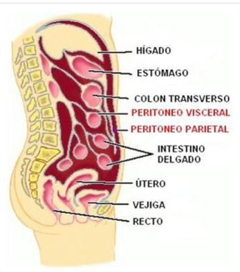 Peritoneo 2