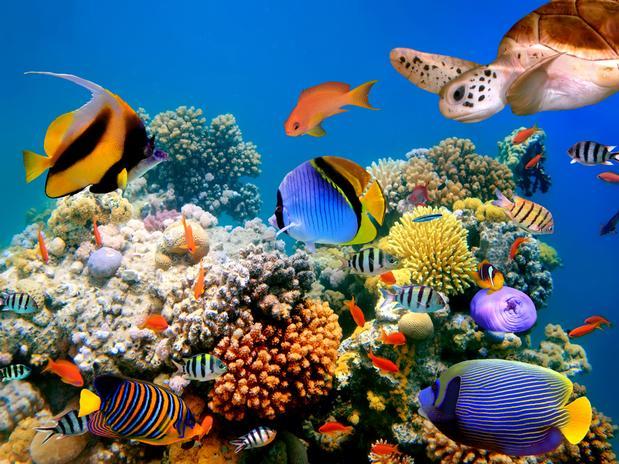 Definici n de biolog a marina concepto en definici n abc for Ornamental definicion