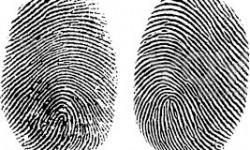 Definición de Huellas Dactilares y Digitales