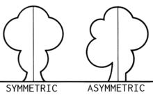 Definición de Asimetría