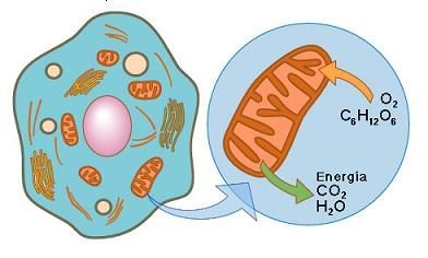 Biochim Biophys Acta 1412 3 191211