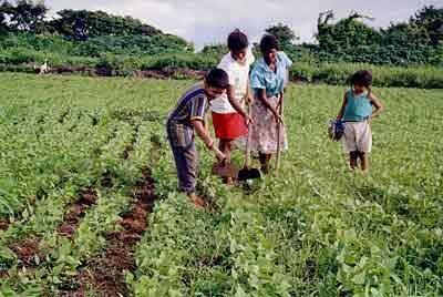 Definici n de agricultura concepto en definici n abc for Terrazas economicas chile