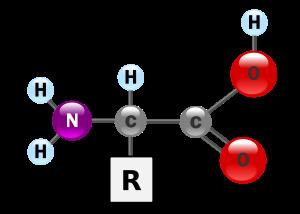 Funciones de los aminoacidos esenciales