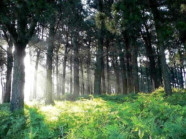 Centro del Bosque - Página 4 Bosque