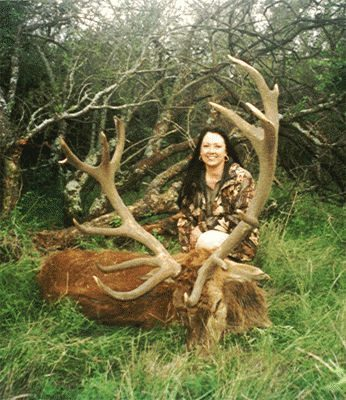 caza-mayor-11-ciervo-colora_gif