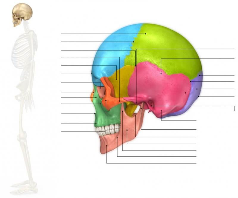 Definición de Huesos de la Cara