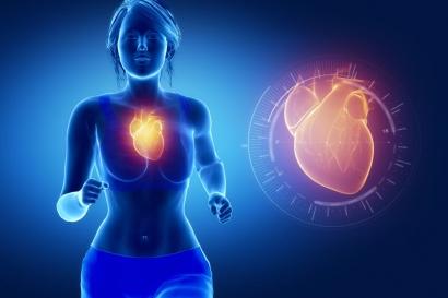 Definición de Sistema Cardiovascular