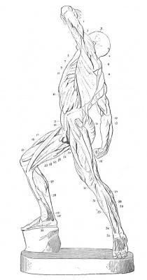 Antropometria-2