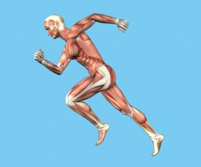 Biomecanica-anatomia-humana