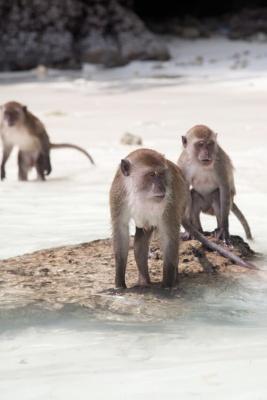 Primates-2