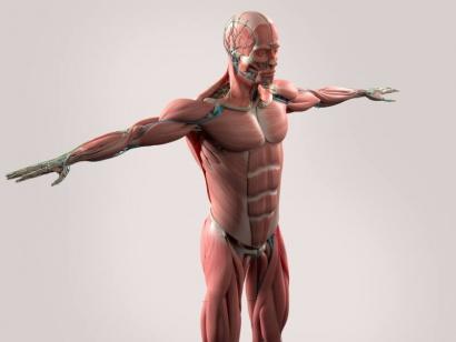 organos-cuerpo-humano