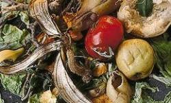 Definición de Desechos orgánicos