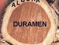 Definición de Duramen