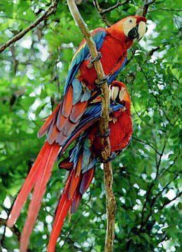Definicion De Fauna Concepto En Definicion Abc