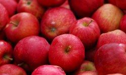 Definición de Manzana
