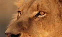 Definición de León