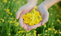 Definición de Crisantemo