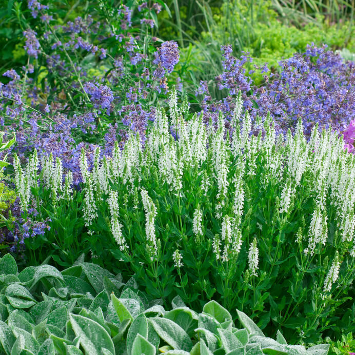 Definici n de plantas ornamentales concepto en for Viveros ornamentales