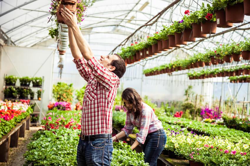 Definici n de vivero concepto en definici n abc for Plantas que hay en un vivero