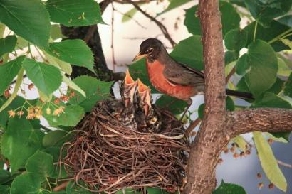 nido-aves