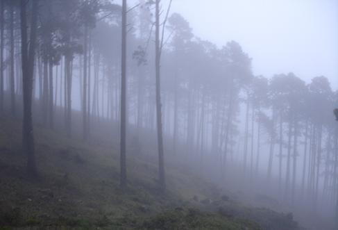 Definición de Niebla