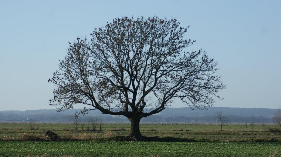 Definición De árbol De La Vida Concepto En Definición Abc