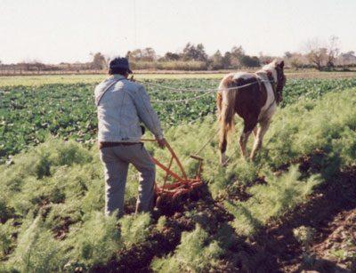 Definición de Rural