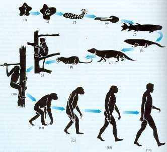 caracteristica comun seres vivo: